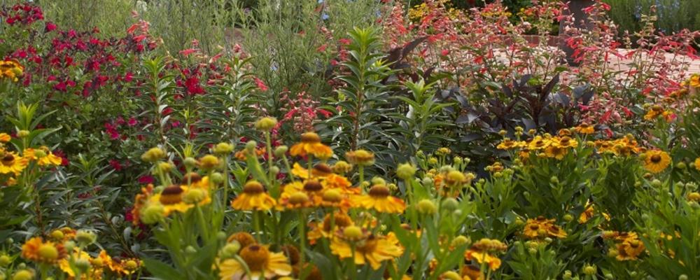 Part 1: Basics of Ornamental Gardening